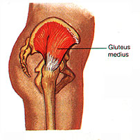 How your BUM controls your BODY! - Riccardo Vaccaro ...